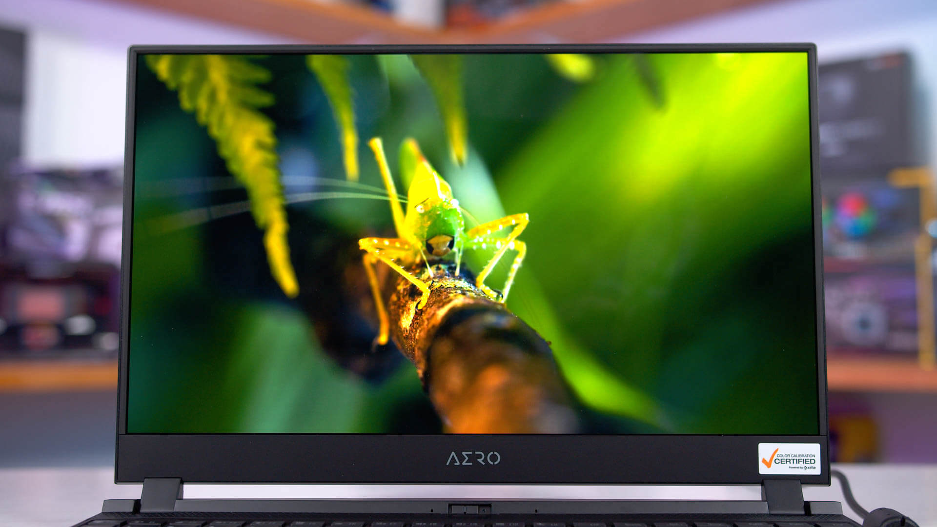Testing an OLED Laptop Display: It's Pretty Amazing - TechSpot