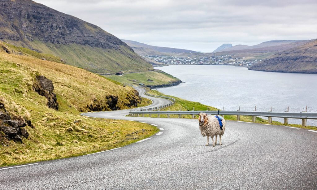 With no Google Street view, the Faroe Islands start using sheep to map the area