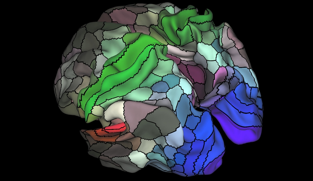 Scientists more than double the number of mapped regions of the brain