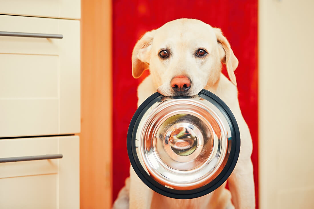 Animals miss meals as server problem causes connected pet feeders to fail