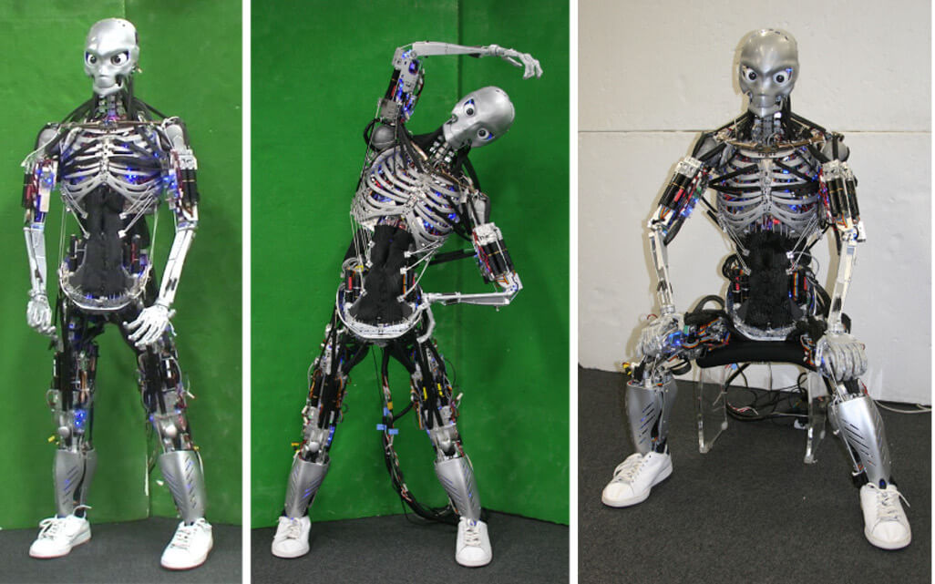 This robot has a musculoskeletal structure that mimics a human's