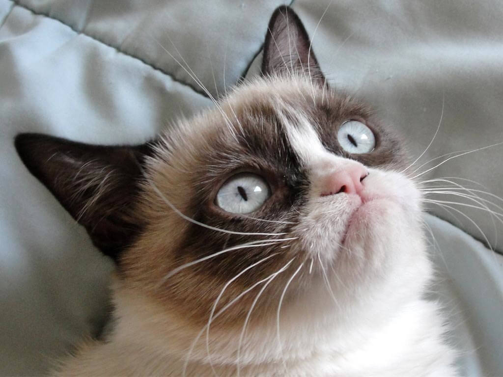 Grumpy Cat wins over $700,000 in copyright lawsuit