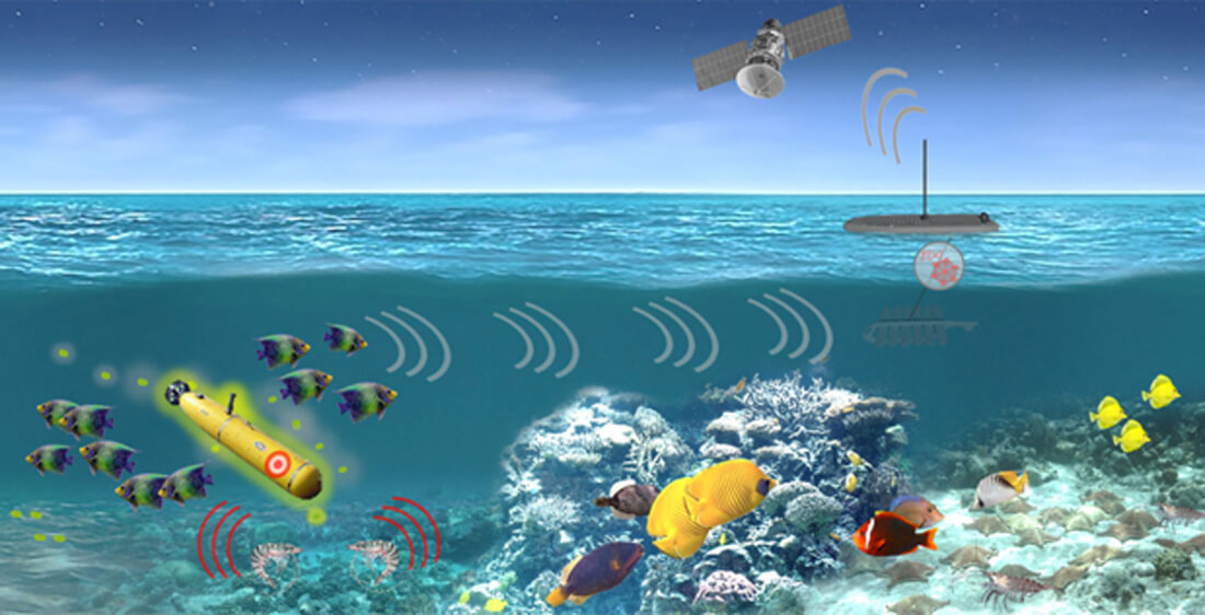 The US military might use marine organisms to detect ocean-bound threats