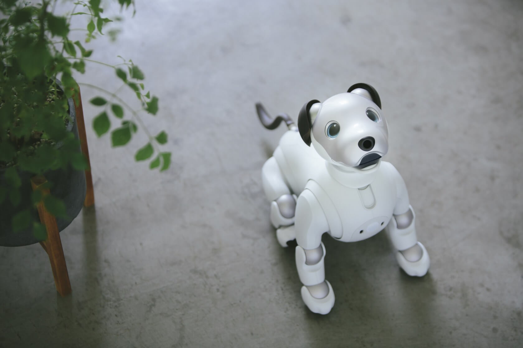 Sony's cyber pooch 'Aibo' will see a US release later this year