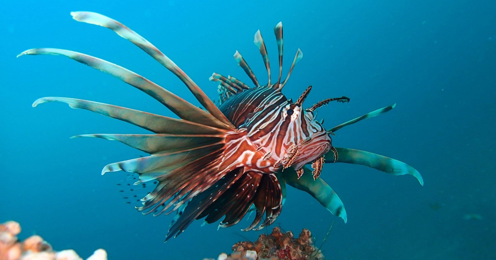 Polytech students are developing a submersible robot to hunt Lionfish