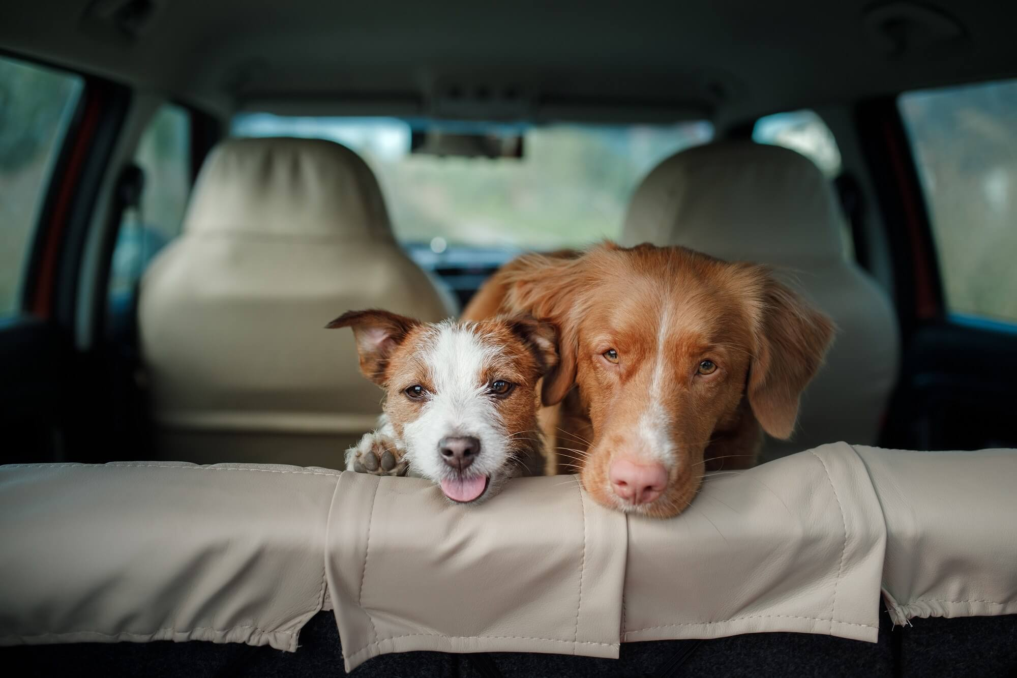 Tesla's New Vehicle Modes Protect Pets, Cars