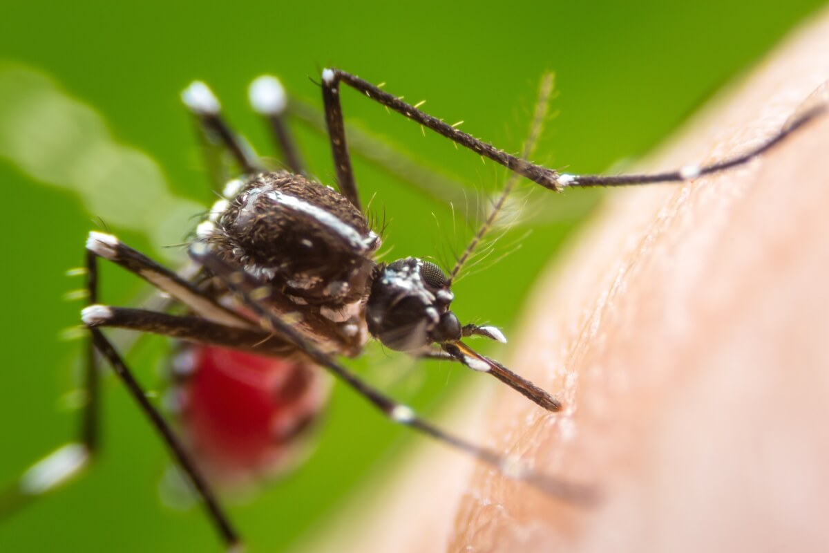 Graphene provides an unexpected two-fold defense against mosquitoes