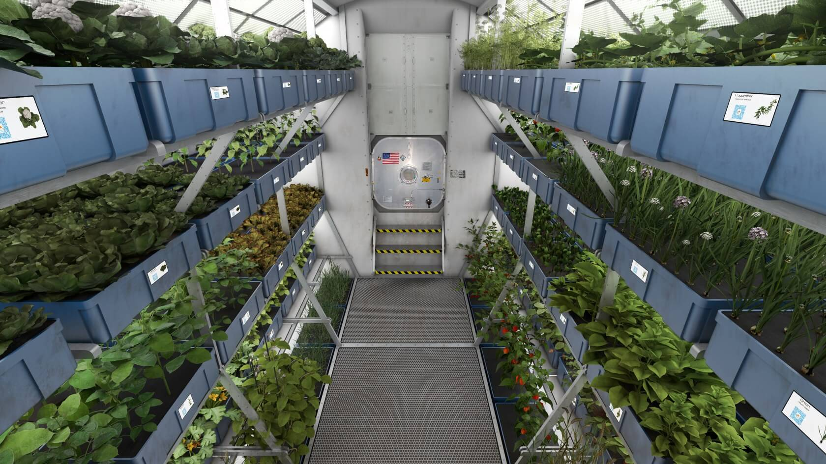 Study shows that lettuce grown on the ISS is just as healthy as its Earth-grown counterpart