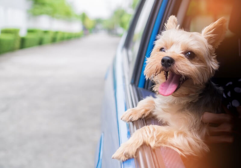Uber will soon enable pet-friendly rides... for a fee
